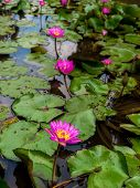 Sea Of Lotus Flower On The Pond. Concept Of Spiritual Enlightenment, Rebirth And Awakening. Selectiv poster