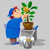 cleaning woman washes houseplant