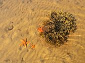 The Seaweeds And The Algea.