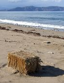 Beach Hay