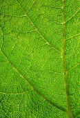 Green leaf macro close up.