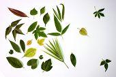Various Green Leaves