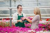 stock photo of picking tray  - Employee in garden center giving woman tray of flowers in greenhouse - JPG