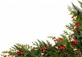 Christmas traditional border of holly, ivy, mistletoe and cedar cypress leaf sprigs with pine cones over white background.
