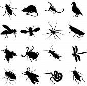 stock photo of creepy crawlies  - sixteen insects rodents and pests as a silhouette - JPG