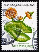 Postage Stamp France 1992 Yellow Water-lily, Aquatic Plant
