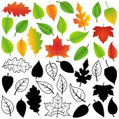 Vector Collection of Green, Autumn, Silhouettes and Outline Leaves