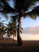 Jaco Palms