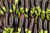 Organic eggplants in an open market at daytime.
