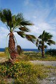 Las palmas y el mar