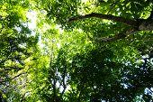 árvores da floresta