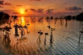 picture of florida-orange  - Sunrise over the ocean in Sugarloaf Key - JPG
