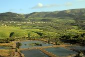 Ponds on Golan Heights