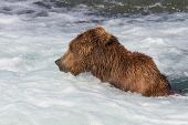 Brown Bear Jacuzzi