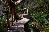 Rainforest Boardwalk With Steps