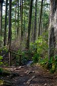Rainforest Pathway With Railing