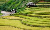 Small Stilt Houses On Terraced Fields With Stream Flowing Through, Mu Cang Chai District, Yen Bai Pr