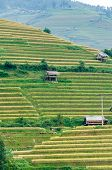 Small Stilt Houses On Terraced Fields, Mu Cang Chai District, Yen Bai Province, Vietnam