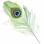 Peacock Feather Vector.eps
