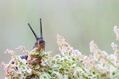 Snail On A Plant