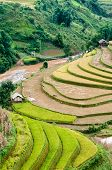 Small Stream Flowing Through The Terraced Fields, Mu Cang Chai District, Yen Bai Province, Vietnam