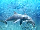 stock photo of oceanography  - HI res Dolphins under water - JPG