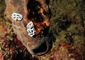 pic of flatworm  - Two Diana - JPG