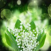 picture of lillies  - lilly of the valley flowers close up on green and black  bokeh  background