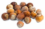 Hazelnuts in the shell