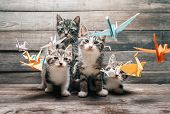 Kittens among paper cranes