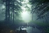 pic of mystery  - Beautiful fantasy landscape of mysterious forest and fog - JPG