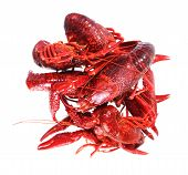 picture of craw  - Many boiled craw fish isolated on white - JPG