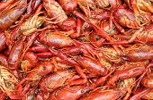 pic of craw  - closeup boiled craw fish for background uses - JPG