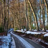 Curving Road Through Snowy Woodland