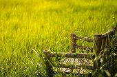 Bamboo Wooden Chairs On Grass