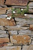 Stone wall with white flowers