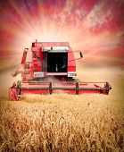 Combine harvesting wheat against colorful sunset.