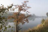 Autumn Tree Near The Lake