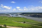 Vineyards and the River Rhine