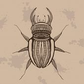 Beetle - in graphic style. Hand drawn