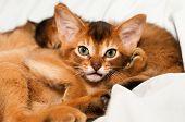 Looking At Camera Kitten Portrait