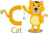 illustration of isolated animal alphabet C for Cat on white