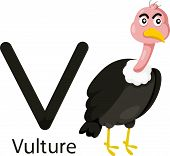 Illustrator of V with vulture