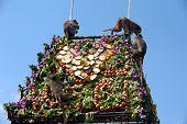 Thailand Monkey Party ( Thailand Monkey Buffet ).
