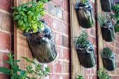 Vertical garden in brick wall