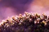 Moss Field close up