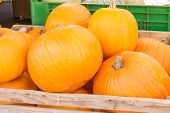 Pumpkins Harvest In Wooden Bowl At Market