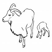 Goat and kid. Hand drawn in ink stile