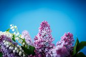 Bouquet Of Beautiful Purple Lilac