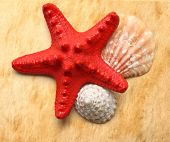 Seastar And Seashells On Stained Paper